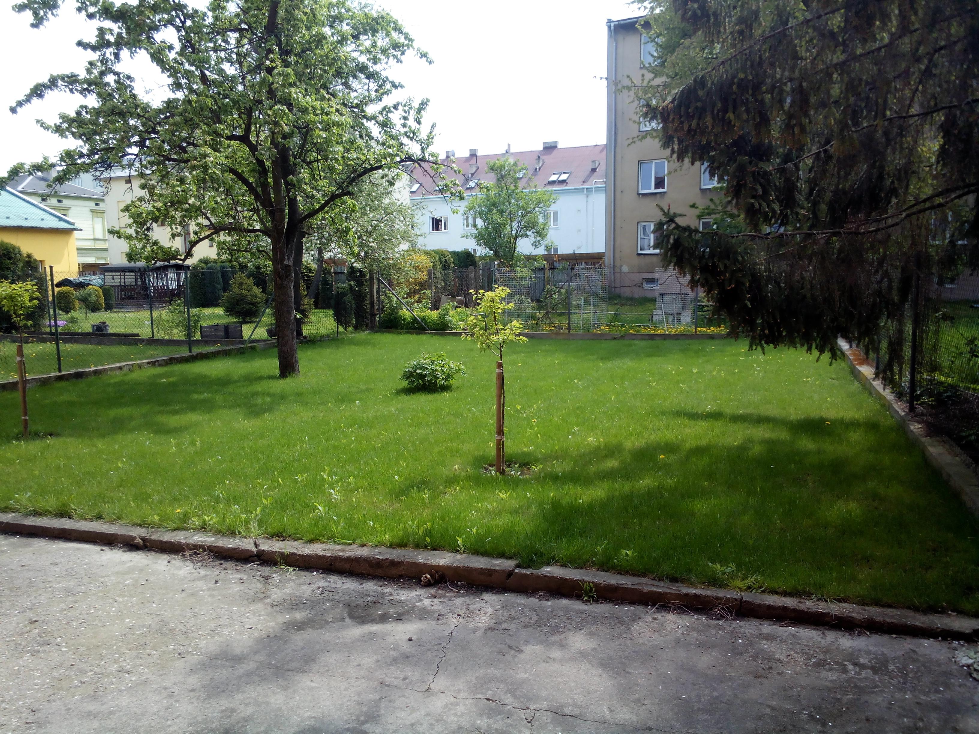 založení trávníku 2