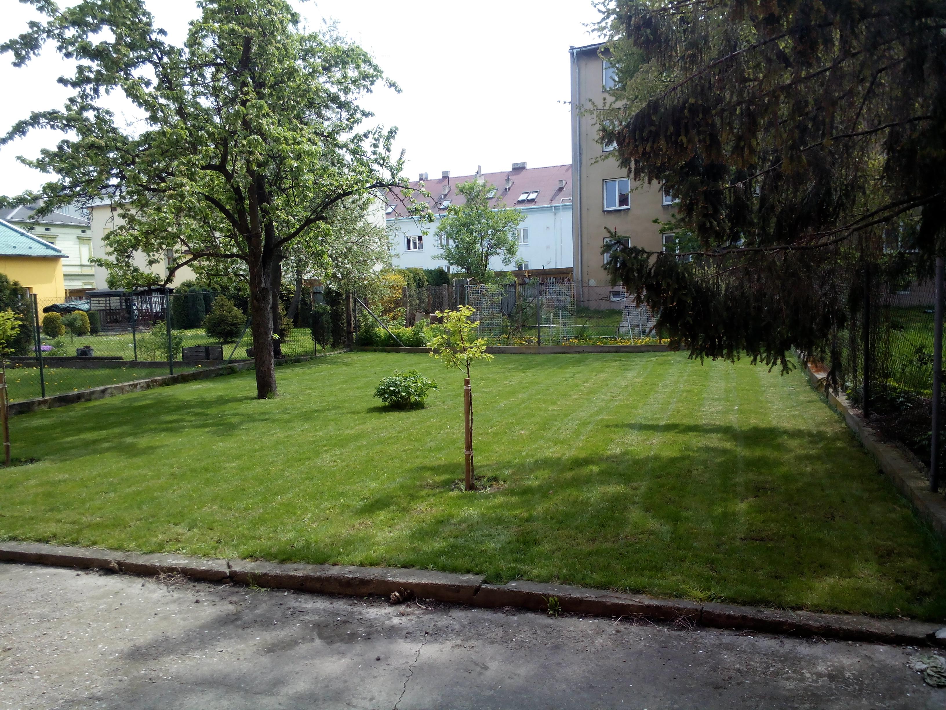 založení trávníku 3